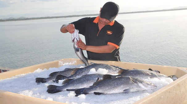Barramundi Fishing Activity - 5 star holiday experience near Wanggulay